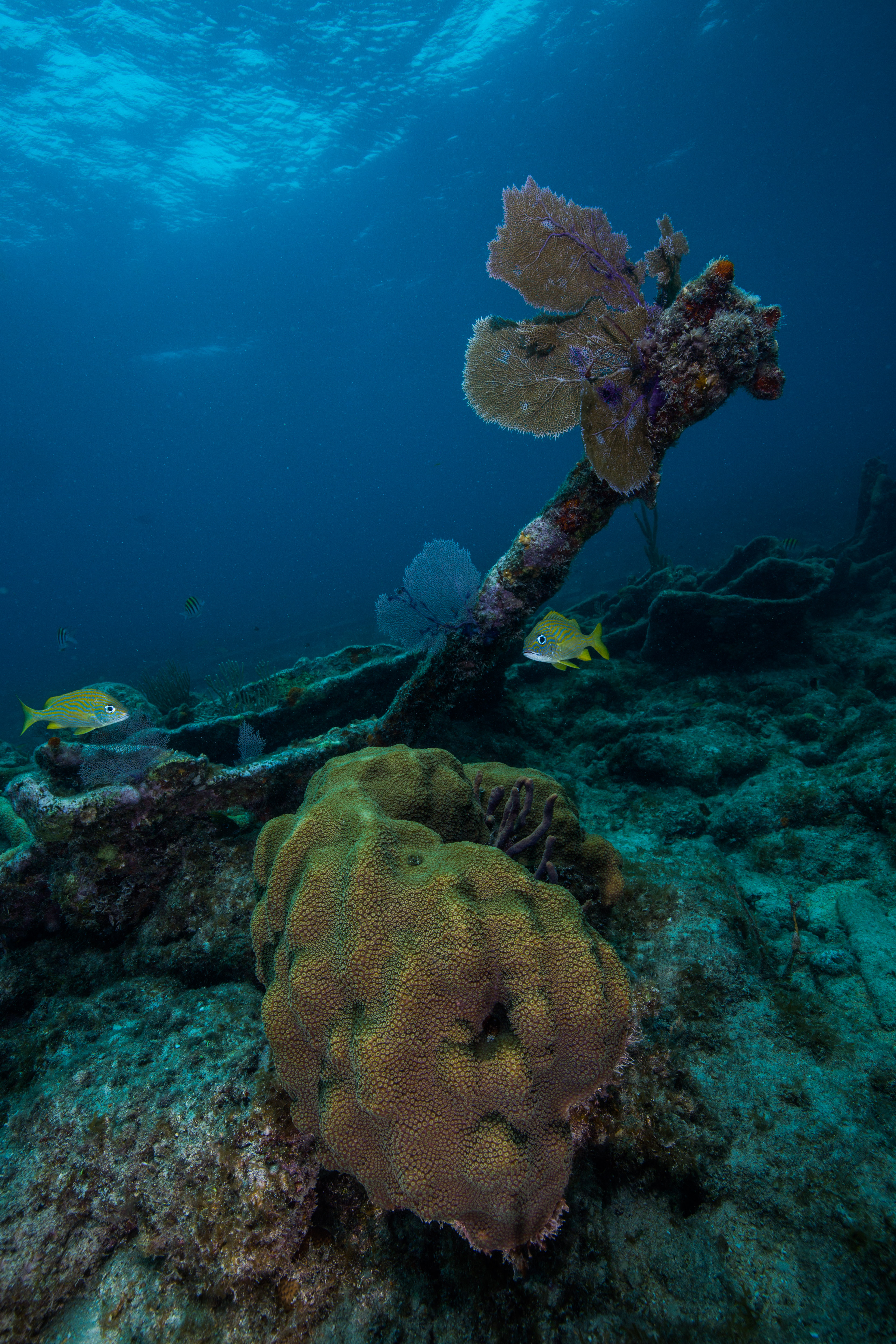 Our World - Underwater Scholarship Society®