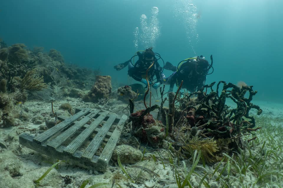 two scuba divers looking at a derelict lobster trap underwater