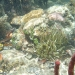 corals and other marine life in the mangroves
