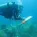 belt transect fish census